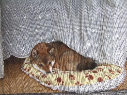 揺れるカーテン