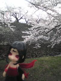 myou-sakura