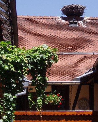 屋根の上のコウノトリの巣downsize