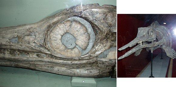 複合イクチオサウルス