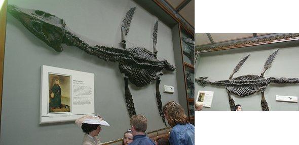 複合Mary Anningとクビナガ竜