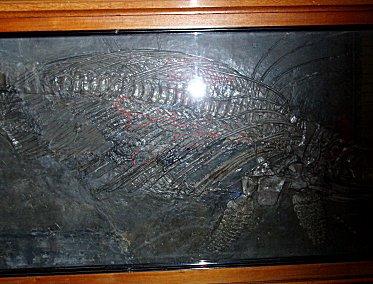 イクチオサウルスの胎仔downsize