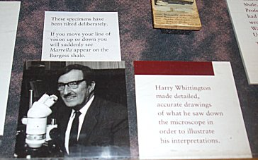 Harry Whittington博士REVdownsize