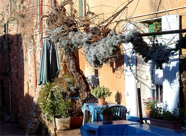 ルシヨン、陽だまりの樹REVdownsize