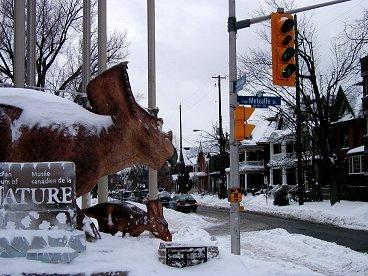 雪の中で恐竜が出迎える博物館downsize