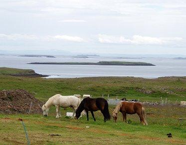 風が抜ける草原で草をはむ野生馬REVdownsize