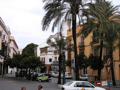 小さな広場のシュロの街路樹downsize