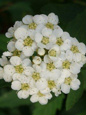 幻想的な集合花downsize