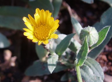 陽だまりの花とつぼみREVdownsize