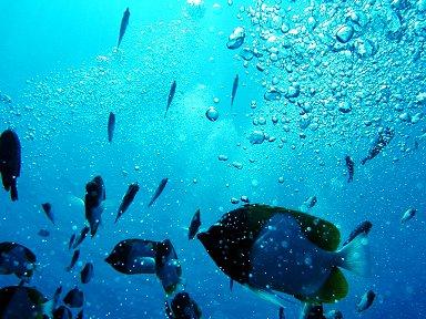泡の中を泳ぐ魚たちエサがもらえるかもと寄ってきますdownsize