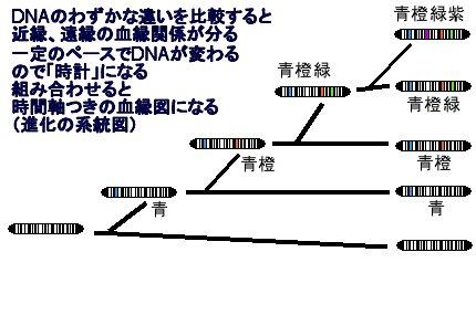 分岐分類法の図その1