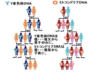 家系図downsize