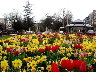 花の広場Dijon downsize