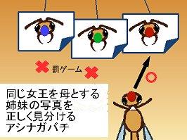 仲間の顔写真が分るハチさんREV
