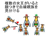 顔を見分けるアシナガバチ