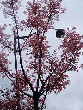 秋の曇り空に淡い紅葉の美しいモザイク模様downsize