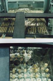 原子炉の炉心