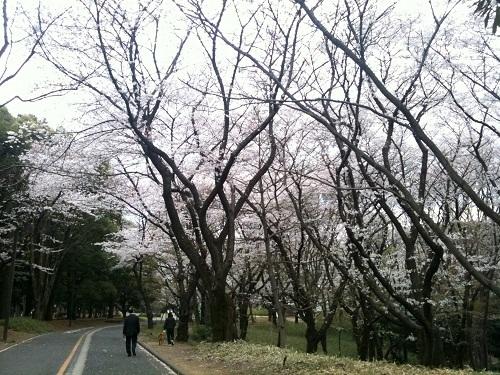 yoyogikoen2.jpg