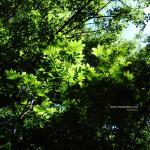 上高地green