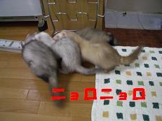 20050515171550.jpg