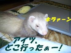 20050726215038.jpg