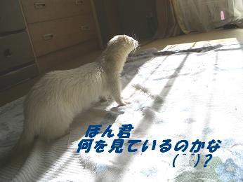 20051105183849.jpg