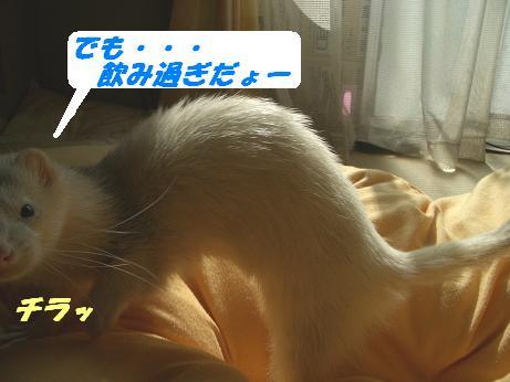 20051112095607.jpg