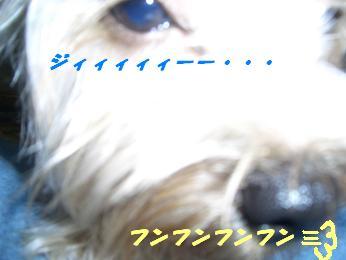 20051126190144.jpg