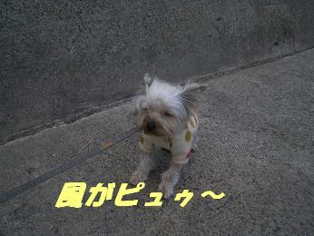 20060116155822.jpg