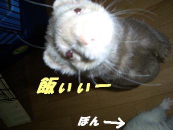 20060117180254.jpg