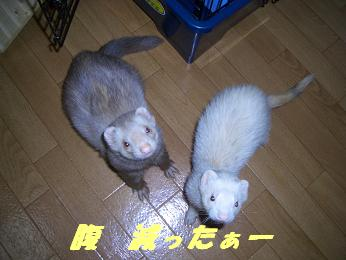20060117180540.jpg