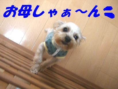 20060527160116.jpg