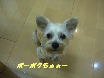 20060624180151.jpg