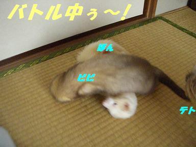 20060917095116.jpg