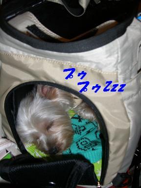 20061119215000.jpg