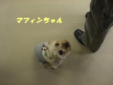 20061127165039.jpg