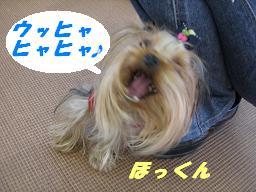 20061230133211.jpg