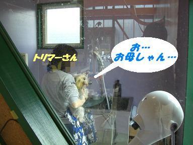 20070112194648.jpg