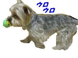 20070215210335.jpg