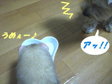 20070215212714.jpg