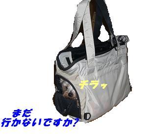 20070217173102.jpg
