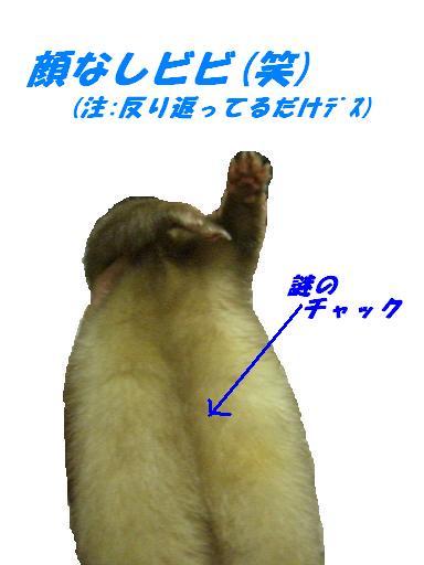 20070222175918.jpg