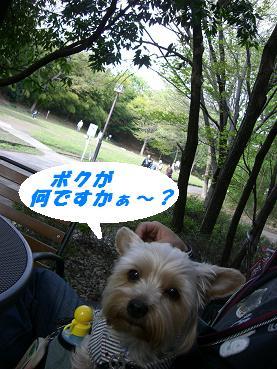 20070416104500.jpg