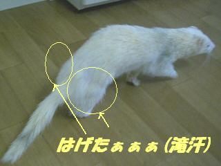 20070511121007.jpg