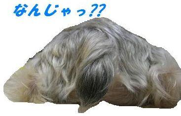 20070614163946.jpg