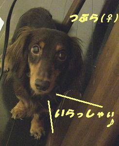 20070717183404.jpg