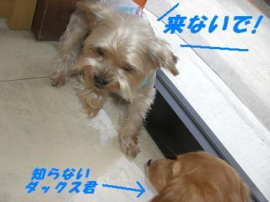 20070804175441.jpg