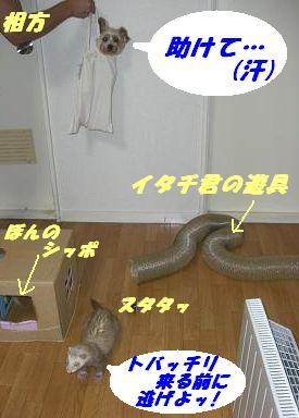 20070911201304.jpg