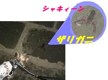 20070915125419.jpg