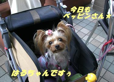 20070929135123.jpg